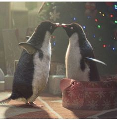 Monty the penguin and his real love - John Lewis Christmas advert