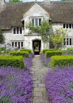 Lavender & boxwood path!