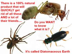 Spiders, Ants, Cockroaches, Earwigs, Centipedes, Bedbugs; Get Rid Of Them All With One 100% Natural Product