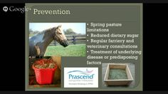 Metabolic problems in your horse? Get the facts from Colorado State University equine experts.