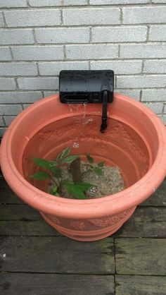Patio pond made from a flower pot (without drain holes) and fish tank filter system...