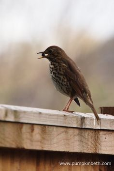 If you're looking for some time out, a lovely and relaxing activity that you can take part in this weekend is the RSPB Big Garden Birdwatch 2017 – simply Big Garden Birdwatch, Garden Design, Wildlife, Pumpkin, Gardens, Animals, Pumpkins, Animaux, Outdoor Gardens