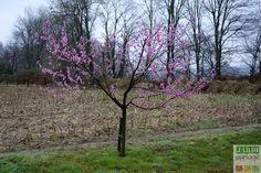comment installer un arbre fruitier colonnaire verger orchard planter des arbres. Black Bedroom Furniture Sets. Home Design Ideas