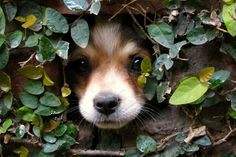 Little pup poking his head through a wall