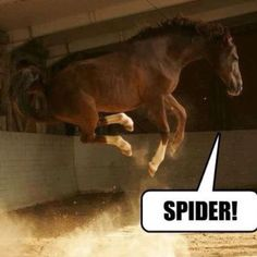 just for us girls afraid of spiders ...probly just how we look