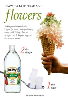 How to keep flowers fresh after theyre cut.
