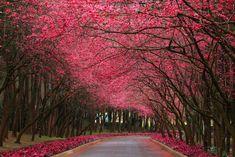 Caminho rosa
