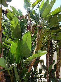 Carmen Stanescu - Google+ Plant Leaves, Sign, Google, Plants, Plant, Planting, Planets