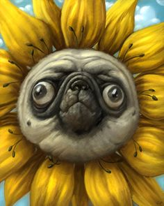 Pugs are so ugly they are cute. This is less cute, mostly disturbing.