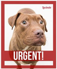6 / 15    ***URGENT*** Petango.com – Meet Lucinda, a 3 years 7 months Terrier, American Pit Bull / Retriever, Labrador available for adoption in DECATUR, GA Address  845 Camp Road , Unit, DECATUR, GA, 30032  Phone  (404) 294-2949  Website  http://www.dekalbanimalservice s.com  Email  adoption@dekalbanimalservices. com