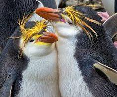 Penguins Animal Hugs, Spirit Animal, Penguin World, Macaroni Penguin, Penguin Species, Penguin Love, Flightless Bird, Animal Pictures, Funny Pictures