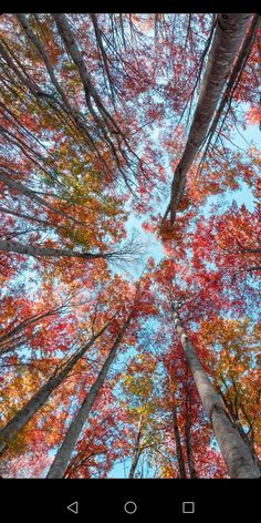 Next Wallpaper, Forest Wallpaper, Meaning Of Love, Diy And Crafts, Sky, Watercolor, Plants, Photography, Visual Arts