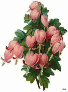 Vintage Bleeding Hearts Scrap ~ LAMINAS... Y TRABAJOS CON FLORES (pág. 184) | Aprender manualidades es facilisimo.com