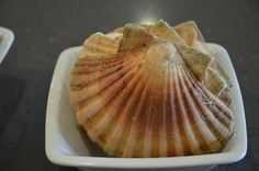 Fresh scallops from the market! Belles coquilles du marché!