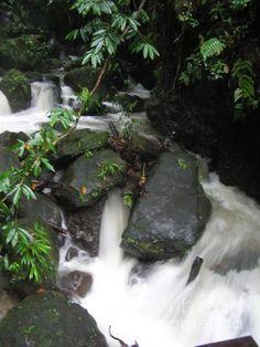 Island Stream