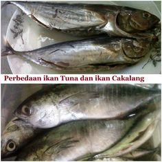 Yuk mengenal nama nama ikan versi orang Manado.  Semoga tulisan ini bisa bermanfaat bagi teman teman yang baru/akan stay di Manado yang belum paham betul dengan bahasa Manado. Ahaa agar ke pasar gak bingung sama nama nama ikannya.  Juga ada ulasan tentang perbedaan fisik antara baby tuna dan baby cakalang. Yuk simak http://aneka-resep-masakan-online.blogspot.co.id/2015/11/mengenal-jenis-jenis-ikan-laut-yang.html