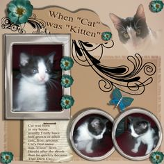 Cat scrapbook page