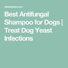 Best Antifungal Shampoo for Dogs Yeast In Dogs Ears, Dog Cleaning, Skin Problems, Getting Old, Dog Treats, Pet Care, Best Dogs, Fur Babies