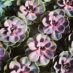 Succulents - purple.  Nice.