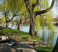 Springtime along the Thames Path