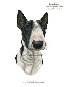 Spike the English bull terrier by Jess Stanley artist