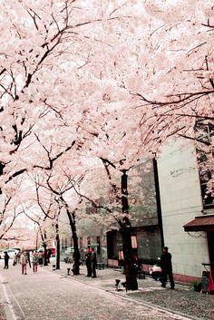 Imagen de pink, japan, and flowers