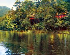 Silky Oaks Lodge. Magnificent tree houses on the banks of the Mossman river in the Daintree.