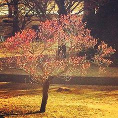 【megurikurumono】さんのInstagramをピンしています。 《「春の夢」はるのゆめ The dream of spring = Haru no yume 春の眠りの中で見る夢のことを言います。夢に季節を冠するのは、春の夢だけ🌸儚さと愁いを存分に含んでいます💕春の夢の中に咲いている木の花は、いつも遠くに咲いているような思いがします🌸✨ #俳句 #haiku #flower #blossom #bloom #自然 #nature #景色 #view #landscape #植物 #plants #botanical #樹木 #trees #forest #森林 #日本 #japan #japanese_culture #flowerlovers #naturelovers #季語 #seasons_words #splendid #spring #春 #桜梅桃李 #東京 #tokyo》