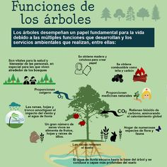 Funciones de los árboles Save Our Earth, Save The Planet, Recycling Process, Science Topics, Eco Green, Green Tips, World Languages, Environmental Issues, Teaching Spanish