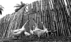 https://flic.kr/p/BdFoHj | Facenda Recanto . Sete Lagoas 03 | Pousada Rural Facenda Recanto Das Cachoeiras . Sete Lagoas . Minas Gerais / Artexpreso . Rodriguez Udias / Sorrisos do Brasil . Fotografia . Dic 2015 ..
