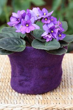 Purple Woolen Flower Pot