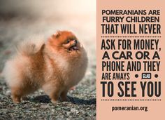 #pomeranian #cutedogtoys