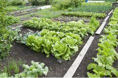 Vegetable Garden Layout: What to Plant Where (with Pictures) | eHow