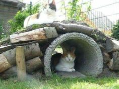 Outdoor Cat Tree, Outdoor Cat Enclosure, Cat Run, Cat Playground, Cat Tunnel, Cat Garden, Cattery, Parcs, Buy A Cat