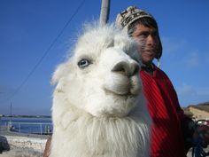Y esta linda llama. | 25 Fotos de Bolivia que parecen sacadas del cerebro de Dalí