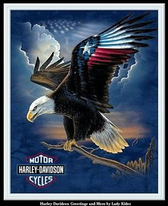 Harley Davidson News – Harley Davidson Bike Pics Eagle Pictures, Patriotic Pictures, Eagle Painting, Eagle Art, Harley Davidson Logo, Harley Davison, I Love America, Motorcycle Art, Wildlife Art