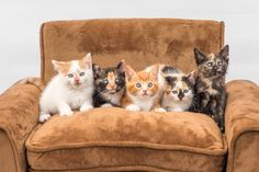 """""""KittensonCouch"""" by BundleofPawsPhotography! Find more inspiring images at ViewBug - the world's most rewarding photo community. http://www.viewbug.com/contests/cats-being-cats-photo-contest/59340835"""