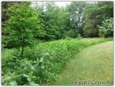 Backyard border meadow