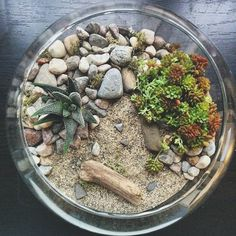 I made this landscape little glass world only to find a huge crack in the bottom of the container a day later... Such a bummer   #succulent #succulents  #succulentobsessed #succulove #succulentlove  #cactus #cacti #cactuslover #cactusclub #urbangarden #tillthesill #botanical #plant #plantlove #gardenlove #garden #gardening #greenthumb #windowsillgarden #terrarium #terrariums #littleglassworlds #unshackledmovement #buylocal #loft #apartment