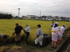 【稲刈り】抜穂祭の後、奉仕者の皆さんで稲刈り開始です!