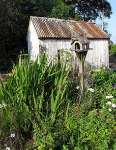 country garden - cute tin roof on the shed and rustic old interior design garden design design ideas interior Love Garden, Garden Art, Garden Design, Garden Sheds, Potting Sheds, Garden Buildings, Rustic Cottage, Garden Pictures, Rustic Gardens