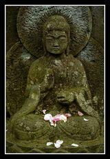 buddha~♥~Zen