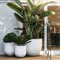 And videos indoor plants, pool plants, balcony plants, balcony garden, gard Outdoor Pots, Outdoor Gardens, Outdoor Living, Large Outdoor Planters, White Planters, Large Garden Pots, Small Outdoor Spaces, Modern Planters, Large Pots