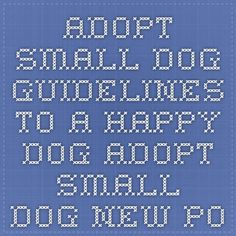 Adopt Small Dog - Guidelines to a happy dog Adopt Small Dog New post: bonding and affection