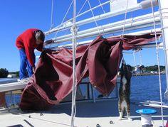 貓咪幫主人架帆船 一起雲遊四海 | ETtoday寵物動物新聞 | ETtoday 新聞雲