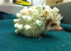 hedgehog marshmellow
