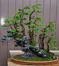 Masahiko Kimura Bonsai   22-bonsais de Kimura