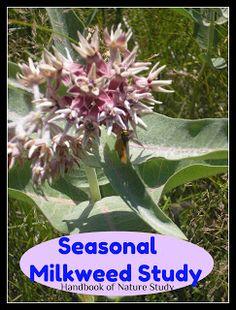 Handbook of Nature Study: Outdoor Hour Challenge- Seasonal Milkweed Study