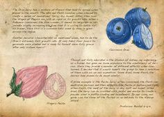 Field Guide: Pg. 28b Berries by *CasteelArt on deviantART