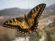#kelebek #butterfly